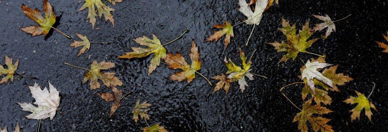 В Украине сегодня местами пройдут дожди, на юге и западе до +18°