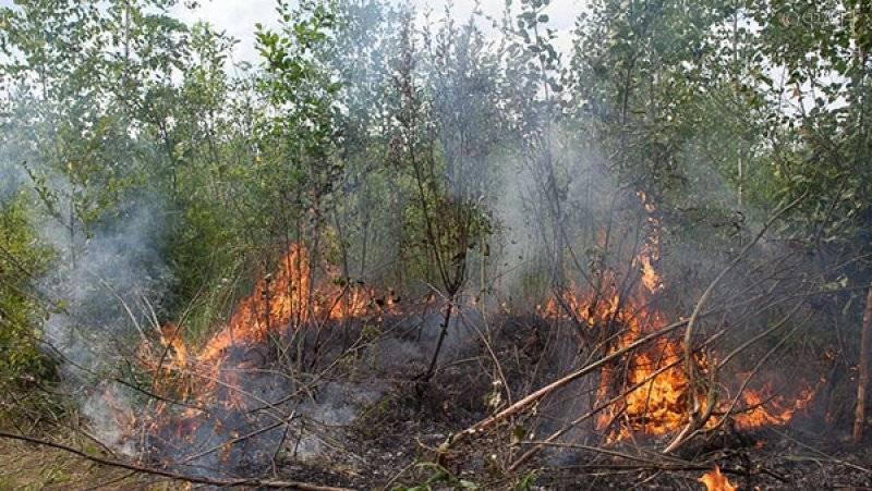 Власти Приморья ввели особый противопожарный режим