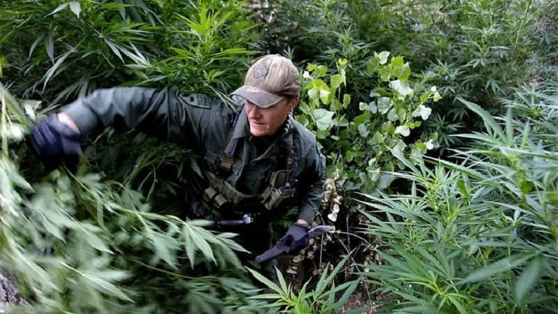 В Северной Калифорнии горят фермы с марихуаной