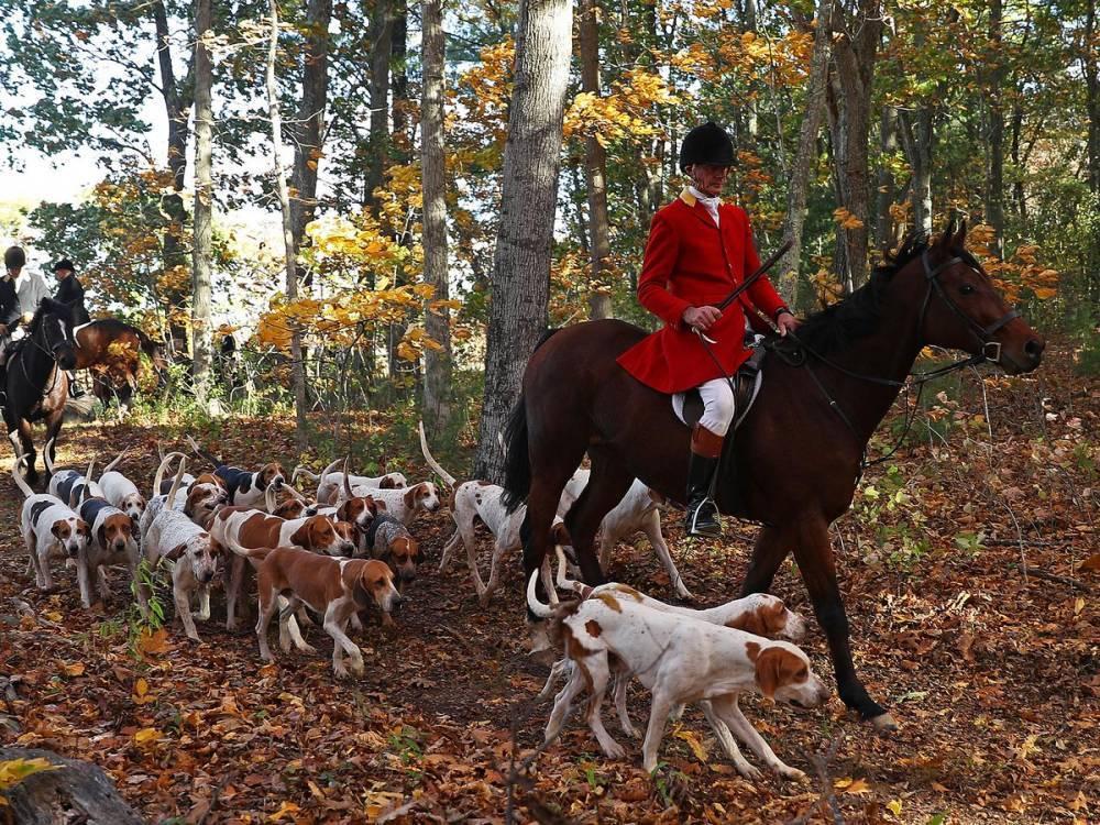 В парках National Trust могут запретить охоту