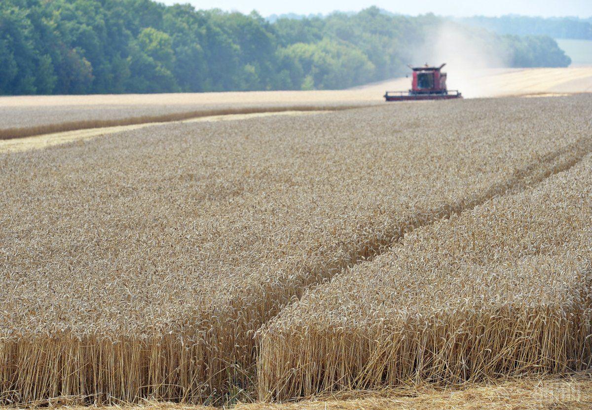 Украинские аграрии экспортировали 13 миллионов тонн зерновых