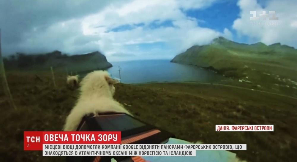 Google отснял онлайн-карты Фарерских островов с помощью овец