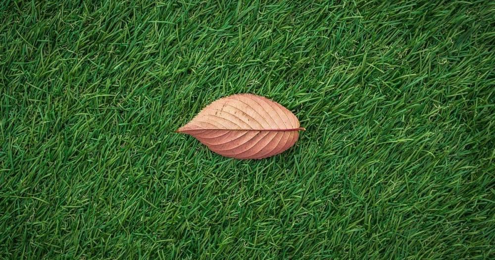 Искусственный газон украли среди белого дня