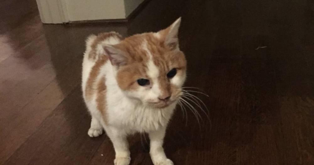 У вице-президента США за полгода умер второй кот
