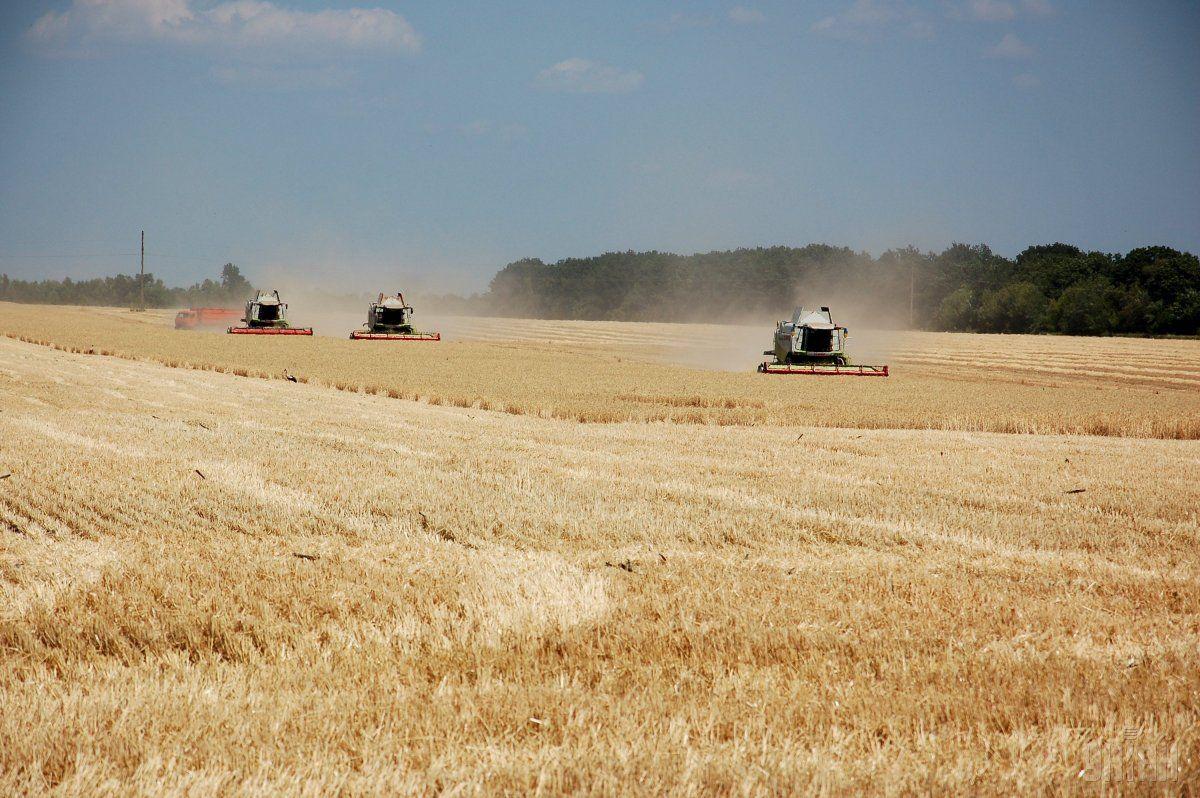 Минагропрод сохраняет прогноз урожая зерна на уровне 61-63 миллиона тонн, несмотря на непогоду