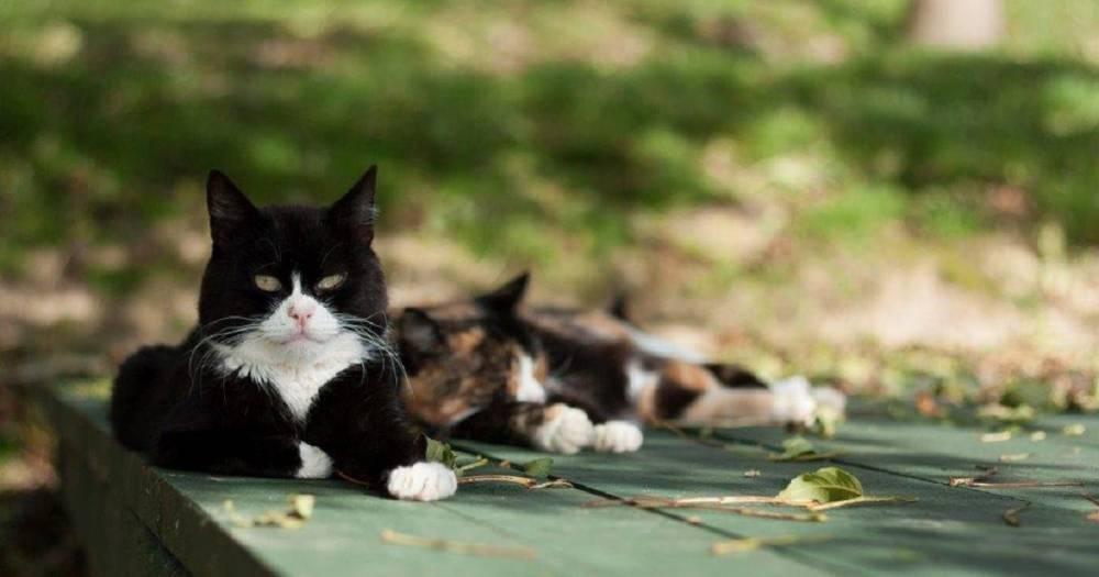 Гончие собаки ворвались на территорию кошачьего заповедника, выгнав животных в лес