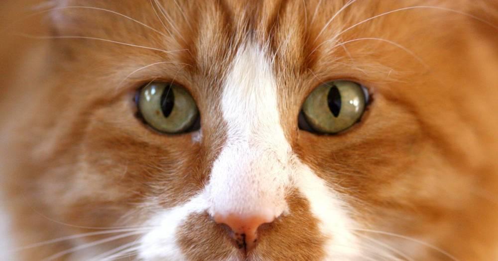 Жительница Италии завещала своему коту €30 тыс.