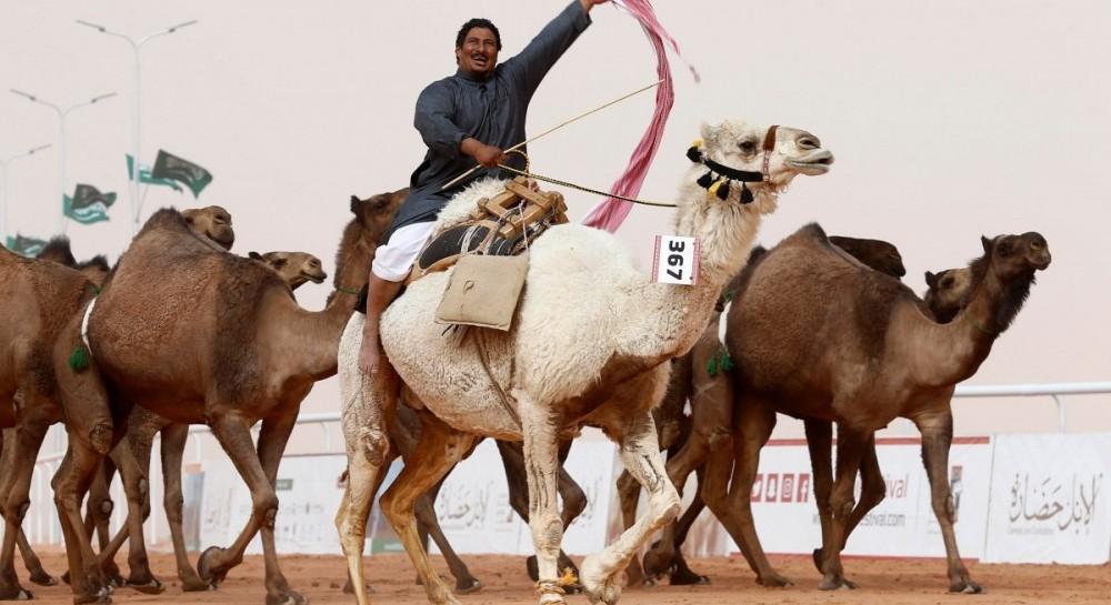 В Саудовской Аравии верблюдиц сняли с конкурса красоты из-за ботокса