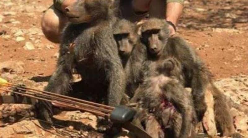 Чиновник из США снялся на фоне убитых им в Африке жирафа, леопарда и семейства обезьянок