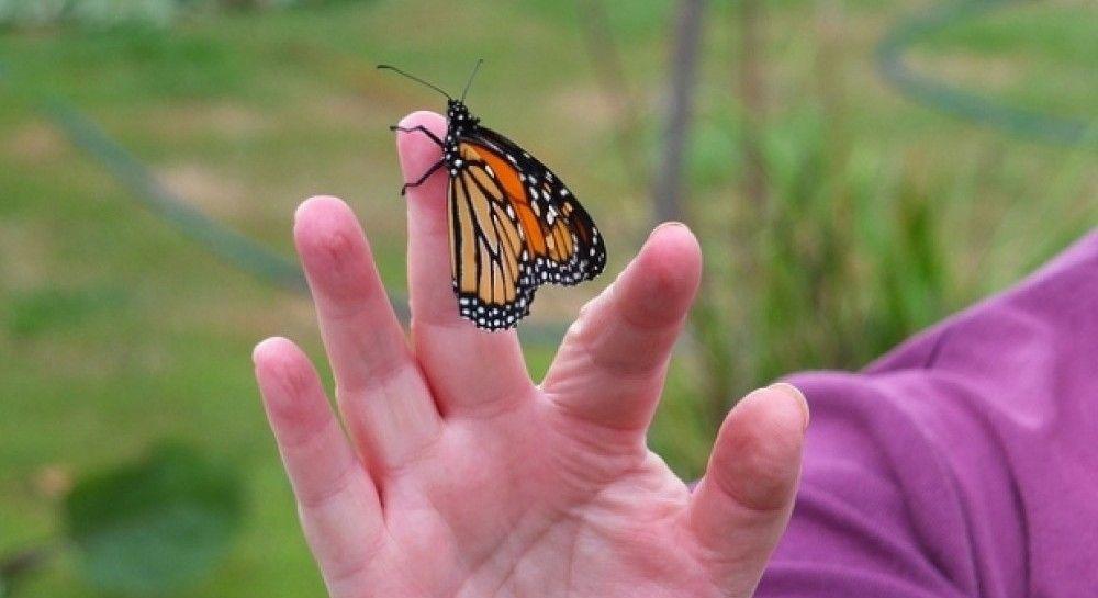 Ученые обеспокоились из-за массового вымирания насекомых по всему миру