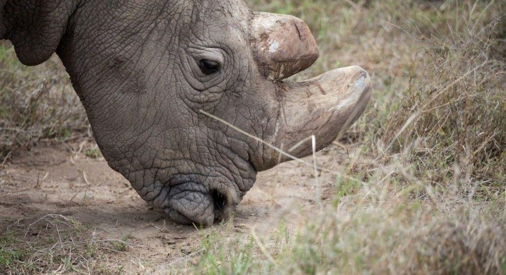 """Премьер Венгрии """"усыновил"""" носорога и просит выбрать ему имя"""
