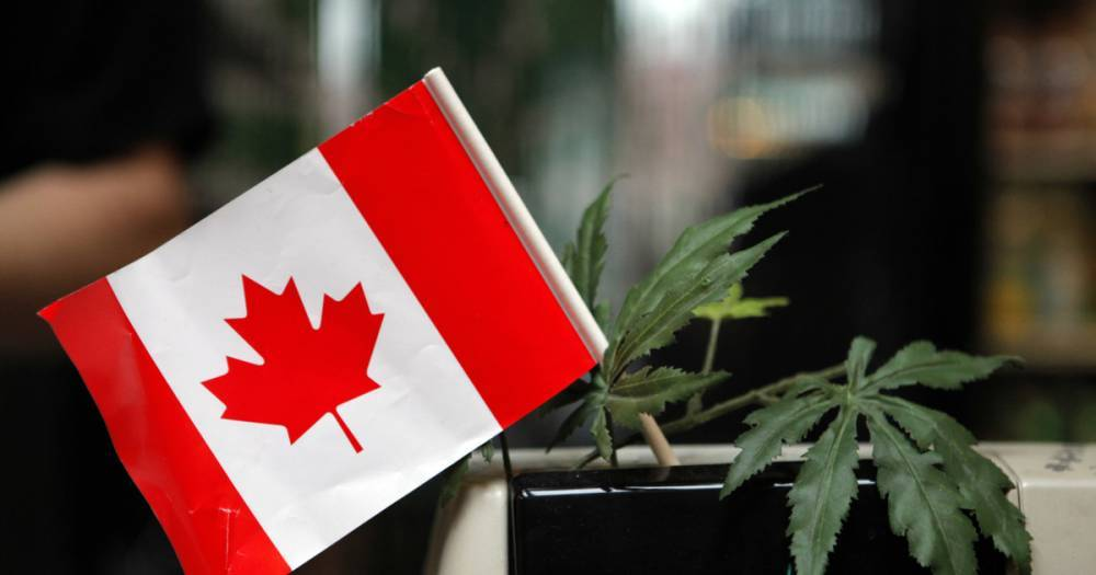В Канаде на пятый день легализации закончилась марихуана