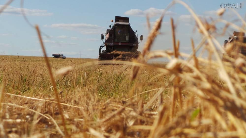 Производители предупредили о возможном росте цен на хлеб в России — СМИ