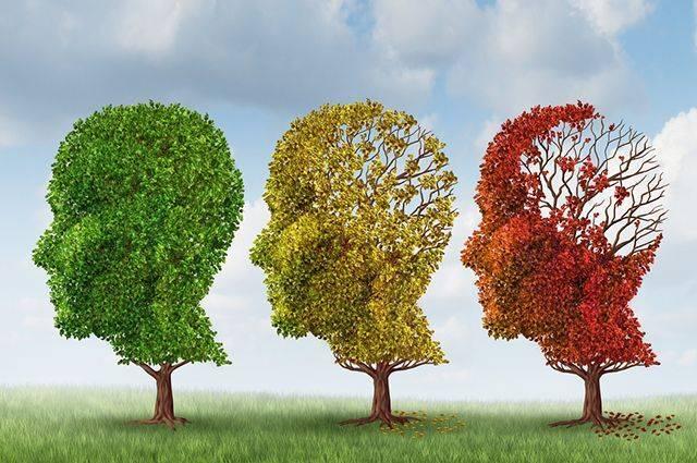 Что выпить, чтобы улучшить память?