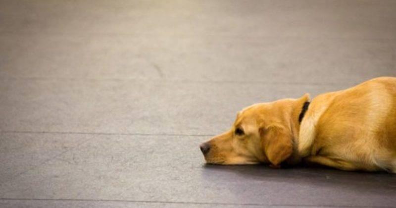 Собакам могут запретить гулять по паркам Боро Грин, так как их хозяева за ними не убирают