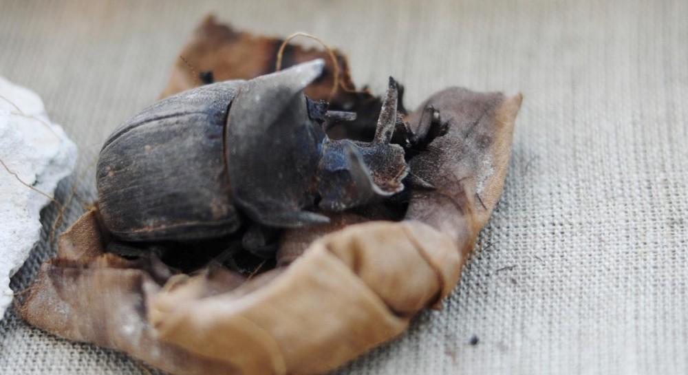 В Египте археологи впервые в истории нашли мумии жуков