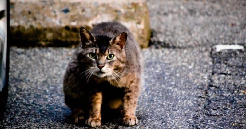 Британец, которого укусила кошка, умер от бешенства в Марокко