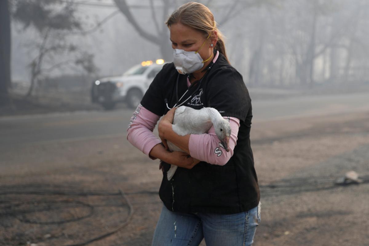 Лесные пожары в Калифорнии: как спасают животных