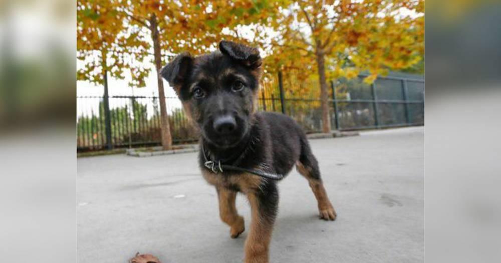 В Испании полицейские спасли щенка от побоев и оставили служить в отделе