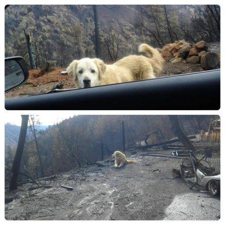 Пес выжил во время лесного пожара и месяц дожидался хозяйки во дворе сгоревшего дома