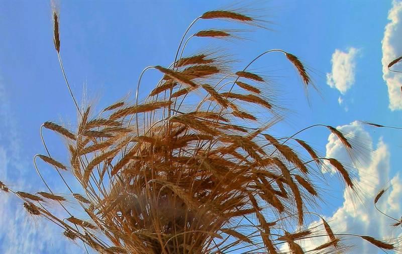 Первую партию российского зерна Эр-Рияду отправят в текущем году