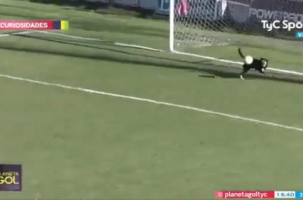 В чемпионате Аргентины пес эффектно отбил мяч с линии ворот