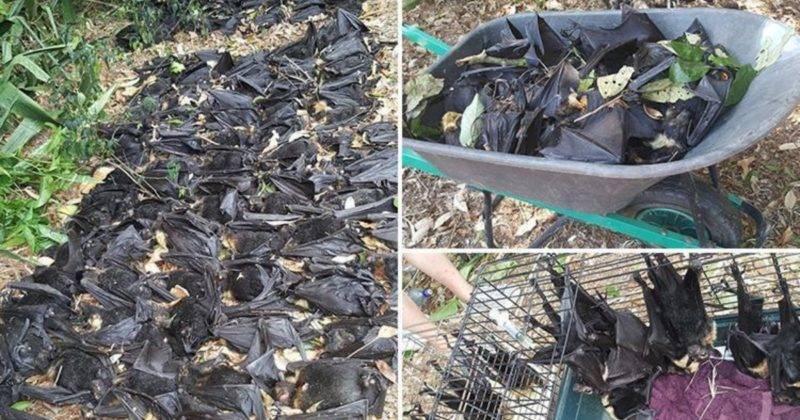 Женщина уехала из дому, когда в ее дворе умерло 5 тысяч летучих мышей