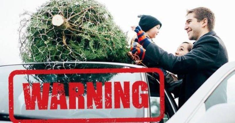 За перевозку рождественской елки водителю могут выписать штраф £100