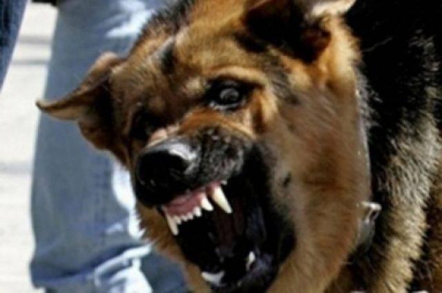 Юрий Лоза рассказал о парне, которого загрызли собаки в Подмосковье