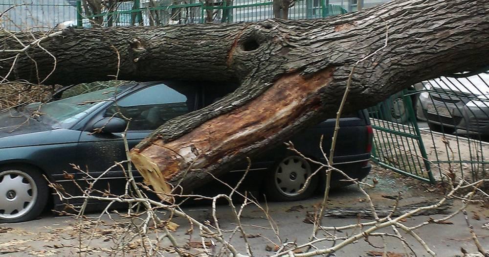 Собянин посетил пострадавших во время урагана в Москве