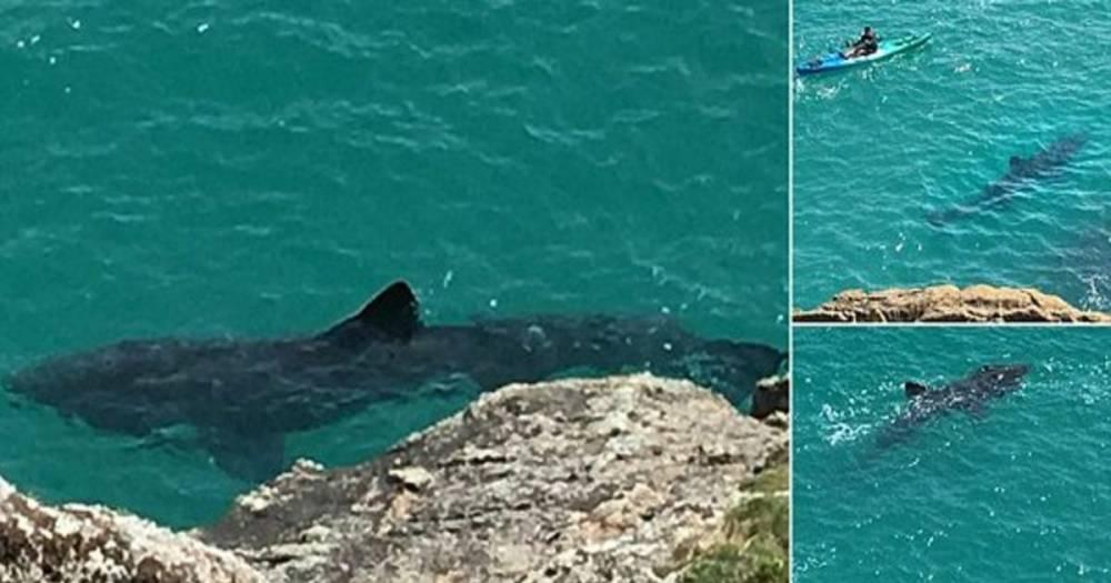 Огромная 7-метровая акула проплыла в паре футов от каякера возле побережья Корнуолла