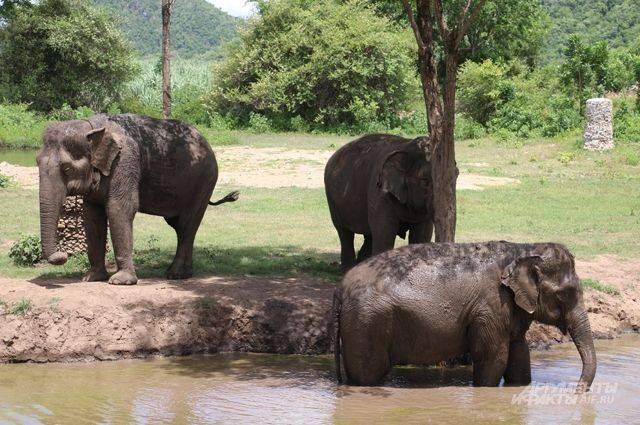 В Македонии обнаружили останки доисторического слона