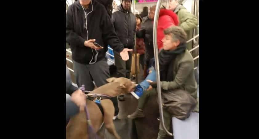 Питбуль напал на женщину в нью-йоркском метро