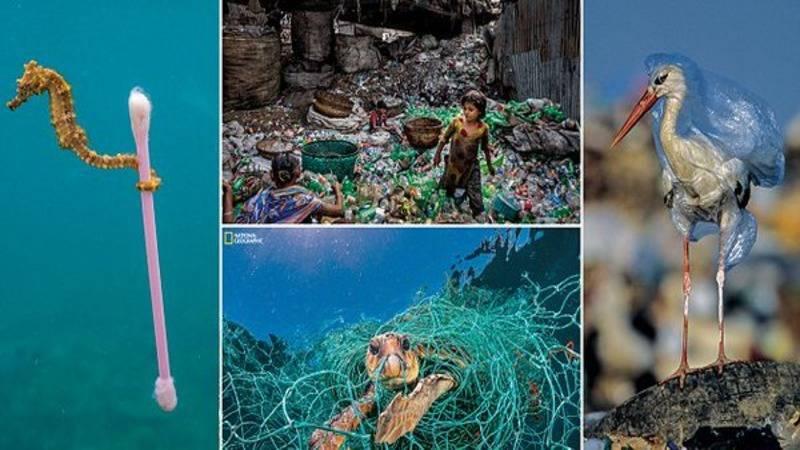 National Geographic представил шокирующие фотографии влияния пластика на морских обитателей и экосистемы