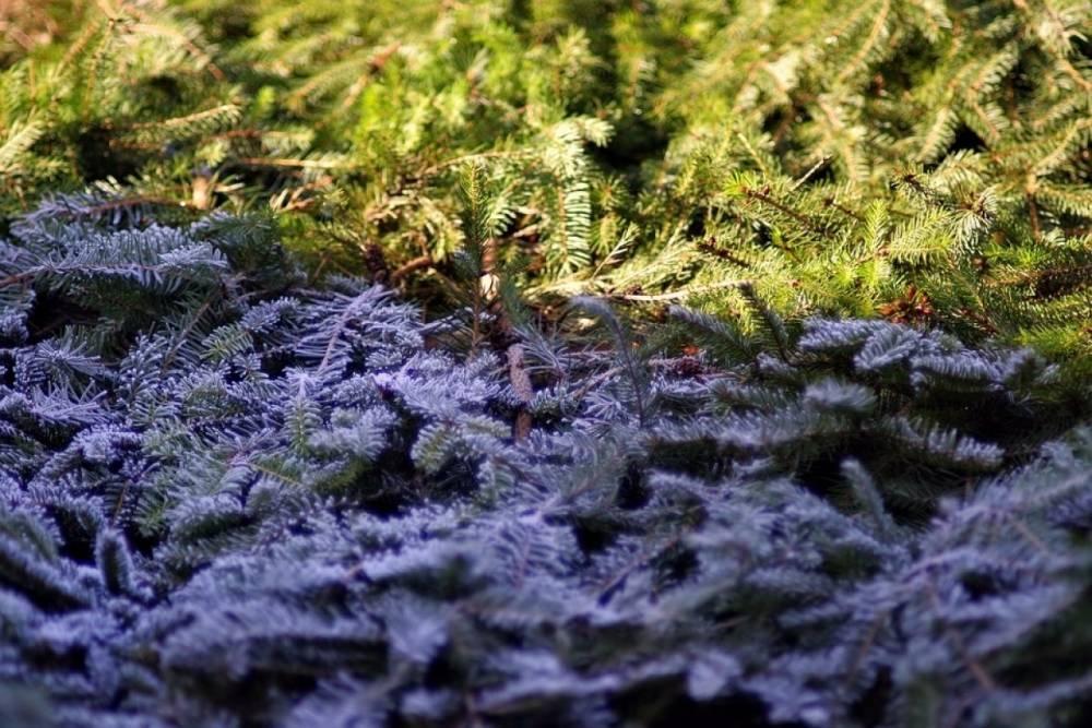 МЧС предупреждает о заморозках в Вологодской области