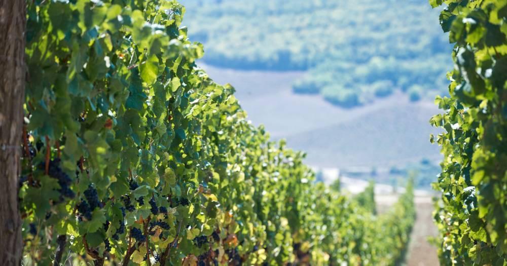 Во Франции продали бутылку вина за 103 тысячи евро
