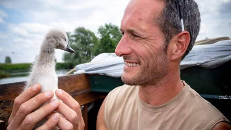 Пользователей интернета растрогала дружба спасенного лебеденка и его хозяина