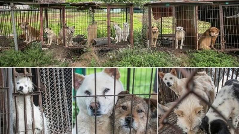 Приятного аппетита! В Южной Корее защитники животных спасли 50 собак от участи быть съеденными