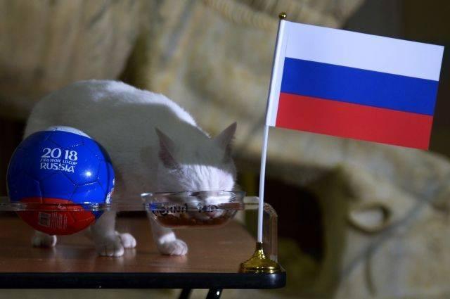 Эрмитажный кот Ахилл предсказал победу России в матче с Египтом