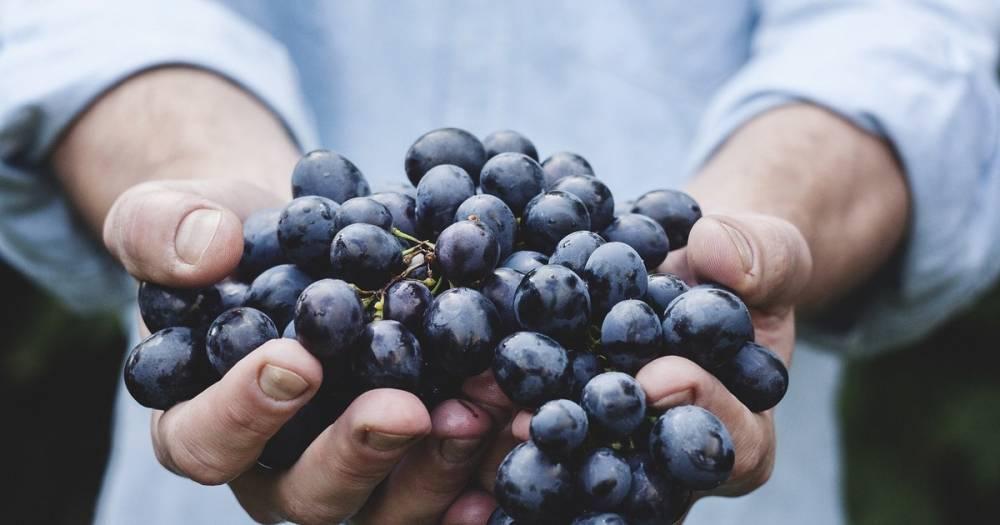 Почти вино. Грузия собирается выращивать виноград на Марсе