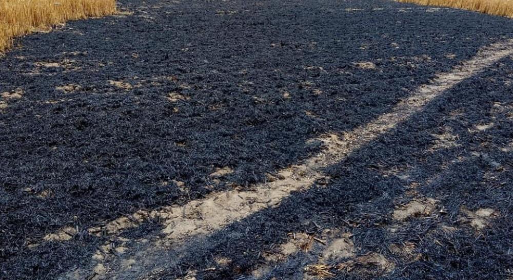 В Одесской области терроризируют депутата: злоумышленники подожгли поле с урожаем пшеницы