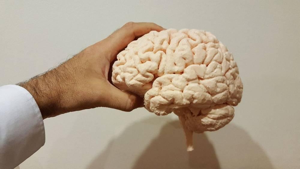Ученые в США вырастили мини-мозг неандертальцев