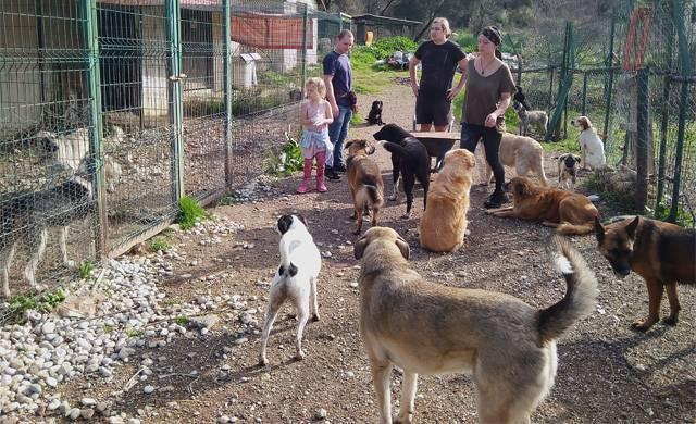 Сто хвостов и много ног. Что делают волонтеры в турецком приюте для животных