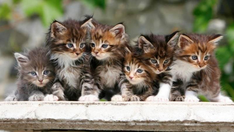 Коты, кошки и котята: тонкости содержания