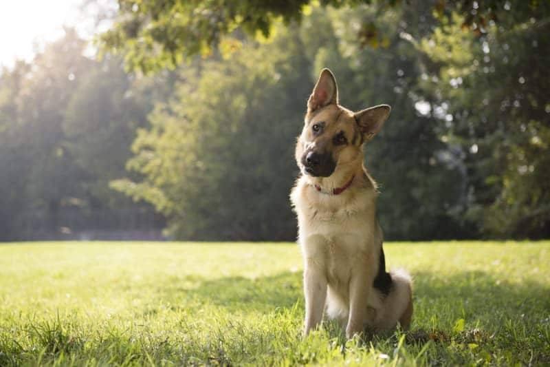 Топ-9 собачьих привычек и причины, по которым они это делают