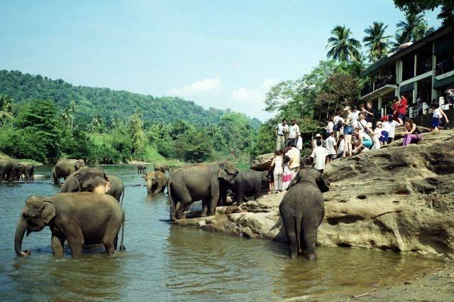 Роспотребнадзор предупредил о вспышке лептоспироза на Шри-Ланке