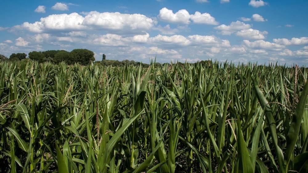 Одноместный самолет разбился на кукурузном поле на Украине, есть жертвы