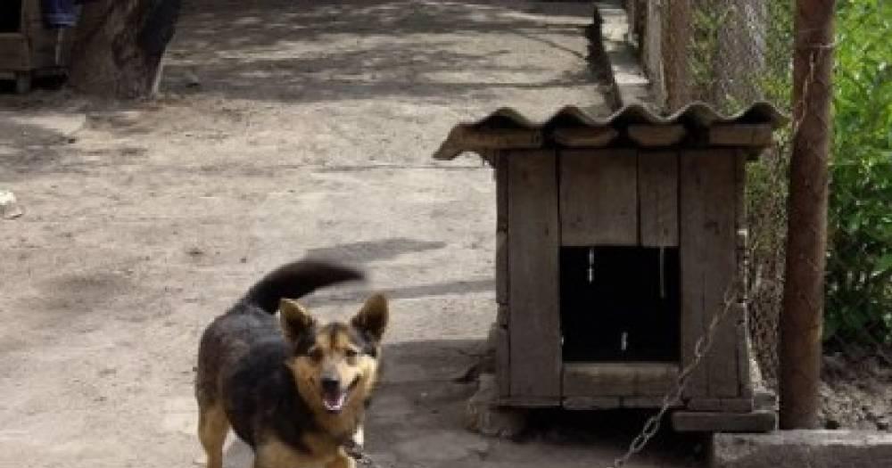 Забежала в будку. Цепной пёс прокусил голову двухлетней девочке в Ленобласти
