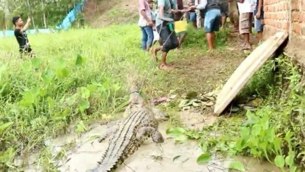 Разъяренная толпа до смерти забила сотни крокодилов