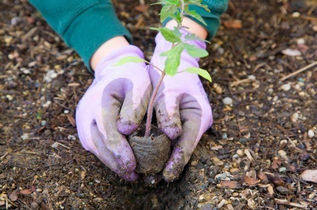 Руки под защитой. Какие перчатки выбрать для работ в саду?